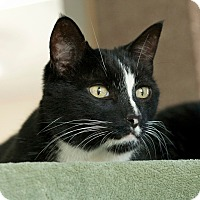 Adopt A Pet :: Pepe le Mew - Coronado, CA