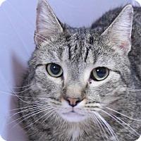 Adopt A Pet :: Hondo - New  York City, NY