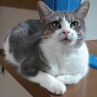 Adopt A Pet :: KRIS - Dallas, TX
