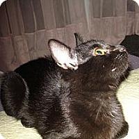 Adopt A Pet :: Petal - St. Louis, MO