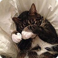 Adopt A Pet :: Finny - Brooklyn, NY