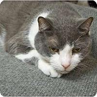 Adopt A Pet :: Buddy - Secaucus, NJ