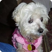 Adopt A Pet :: Daisy Mae - North Benton, OH