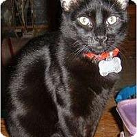 Adopt A Pet :: Gnomers (Gnome-Gnome) - Springdale, AR