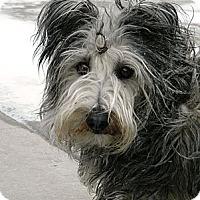 Adopt A Pet :: Stubby - Cheyenne, WY