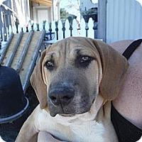 Adopt A Pet :: Jack - Atascadero, CA