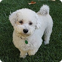 Adopt A Pet :: Mazie - La Habra Heights, CA