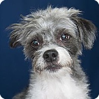 Adopt A Pet :: Titan - Rancho Mirage, CA