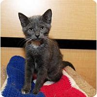 Adopt A Pet :: Treesa - Farmingdale, NY