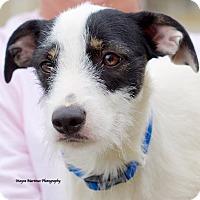 Adopt A Pet :: Bonnie - Marietta, GA