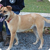 Adopt A Pet :: Lucy-Prison Dog - Elyria, OH