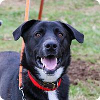 Adopt A Pet :: Lulu $75 - Seneca, SC