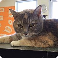 Adopt A Pet :: Gracie - Franklin, NC