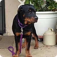 Adopt A Pet :: Sami - Yucaipa, CA