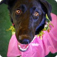 Adopt A Pet :: Jena - Casa Grande, AZ