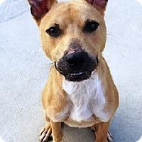 Adopt A Pet :: Finn - Aurora, IL
