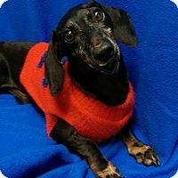 Adopt A Pet :: Manny - Watauga, TX