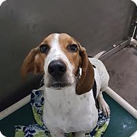 Adopt A Pet :: Gnarley - Pensacola, FL