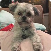 Adopt A Pet :: Wookie - Princeton, MN