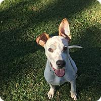 Adopt A Pet :: Rex - Brea, CA