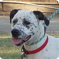 Adopt A Pet :: Emma - Turlock, CA