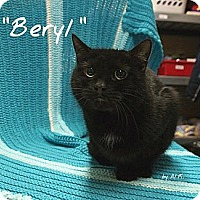Adopt A Pet :: Beryl - Ocean City, NJ