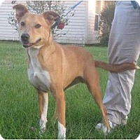 Adopt A Pet :: Savanah - Orange Park, FL