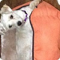 Adopt A Pet :: Mikey - North Hollywood, CA