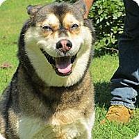 Adopt A Pet :: Alaska - Pineville, NC
