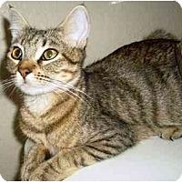 Adopt A Pet :: Sherni - Irvine, CA
