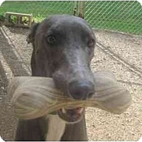 Adopt A Pet :: Sneaker (Certain Circles) - Chagrin Falls, OH