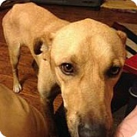 Adopt A Pet :: Sonny - Austin, TX