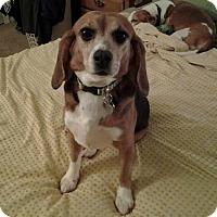 Adopt A Pet :: Payton - Yardley, PA