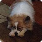 Adopt A Pet :: Zola