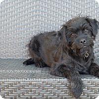 Adopt A Pet :: Sawyer - Drumbo, ON