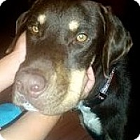Adopt A Pet :: Judd **Courtesy Cupid** - West Allis, WI