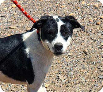 Labrador Retriever Mix Dog for adoption in Aurora, Colorado - Savannah