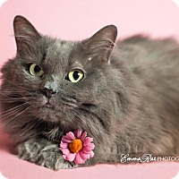 Adopt A Pet :: Dusty - Sterling Heights, MI