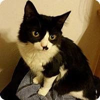 Adopt A Pet :: Rose Quartz - Penndel, PA