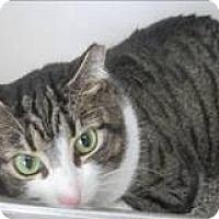 Adopt A Pet :: KGAC - 'Tammy' - Dahlgren, VA
