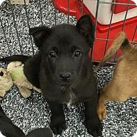 Adopt A Pet :: Eli - Tucson, AZ