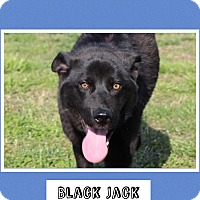Adopt A Pet :: Black Jack (Pom-dc) - Hagerstown, MD