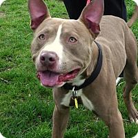 Adopt A Pet :: Osiris - Cleveland, OH
