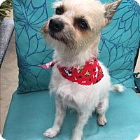 Adopt A Pet :: Augustine - Orange, CA