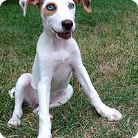 Adopt A Pet :: Jersey - New Oxford, PA