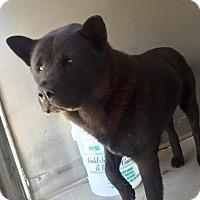 Adopt A Pet :: Caesar - Marina del Rey, CA