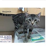 Adopt A Pet :: Benjamin - Laplace, LA