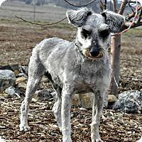 Adopt A Pet :: Sparkie - Yreka, CA