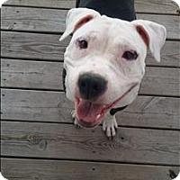 Adopt A Pet :: Delilah - Portsmouth, VA