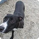 Adopt A Pet :: Omni